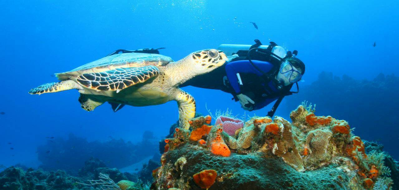 Hawksbill Turtle and Diver - Cozumel, Mexico