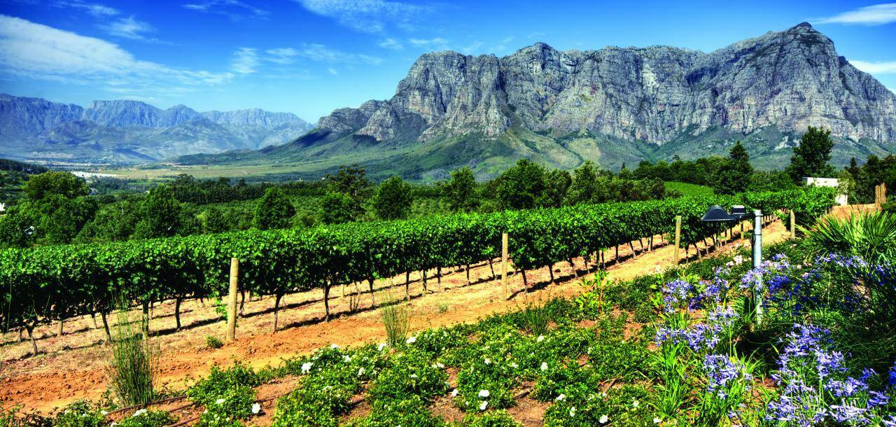 Stellenbosch Vineyards, Cape Town