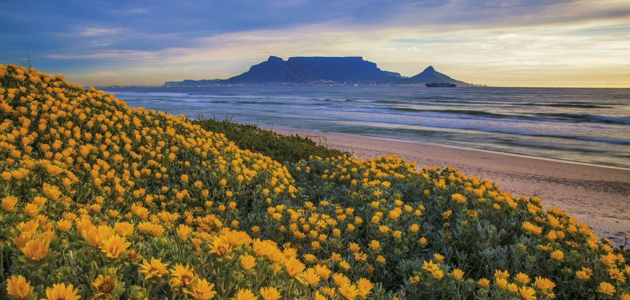 Table Mountain in spring, Cape Town