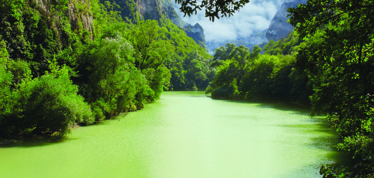 Green waters on the Amazon